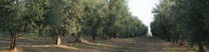 A Vetralla e Viterbo un focus sul termalismo e l'olio d'oliva